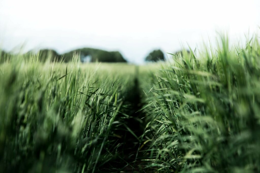 Feld mit hohem, dichten Gras