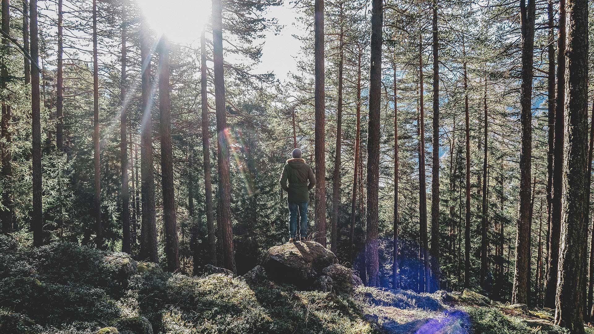 Ein Mann steht auf einem Stein in einem Wald