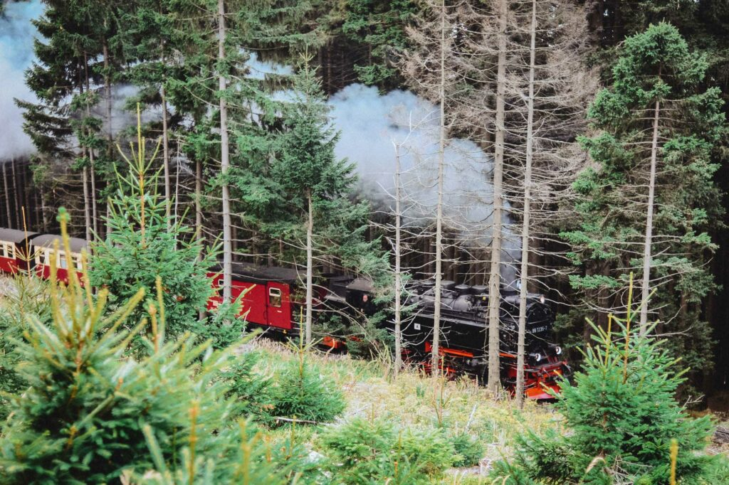 Die Harzer Schmalspurbahn fährt durch den Wald