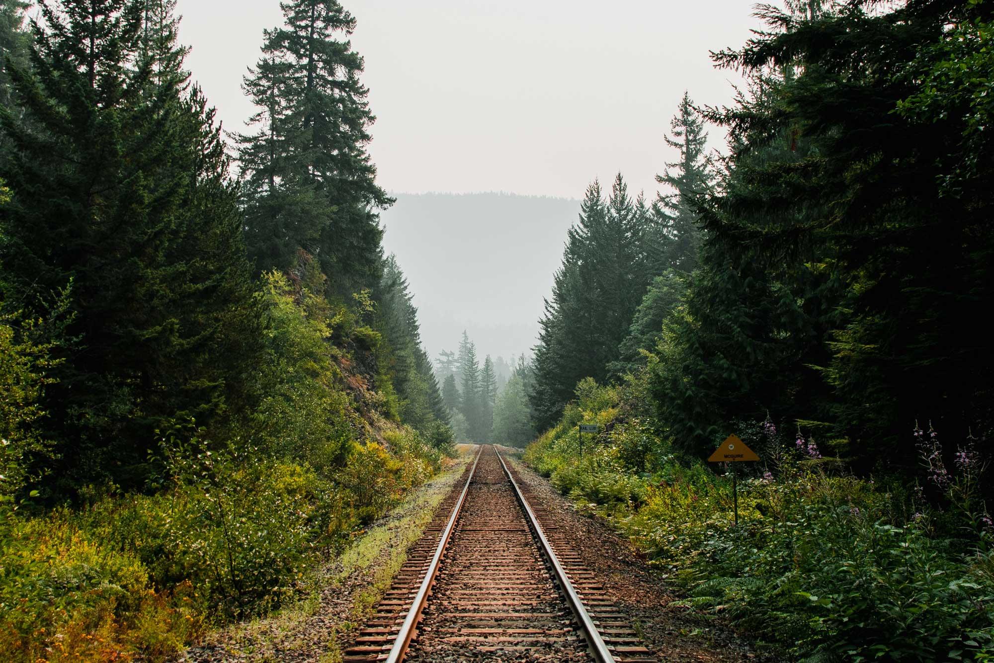 Bahnschiene zwischen Bäumen
